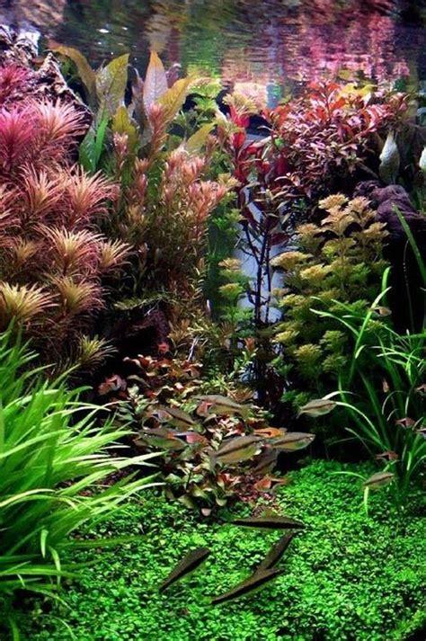 Sun Garden Gartenmöbel 157 by 157 Best Images About Fish Tank Project On