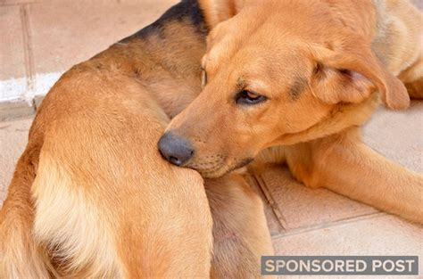 how to treat skin on dogs how to treat 4 common canine skin injuries and irritations