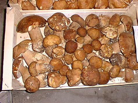 Definition Porcini by Porcini Popsugar Food