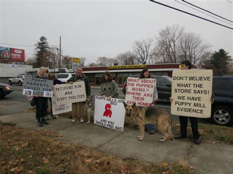 puppies of westport protest at quot puppies of westport quot in norwalk shakes up a gray sunday greenwich ct patch