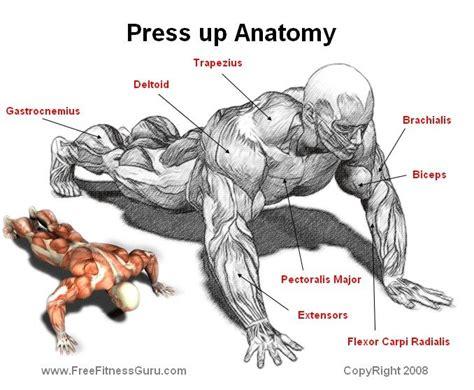 dave taylor bench press press up anatomy workouts pinterest