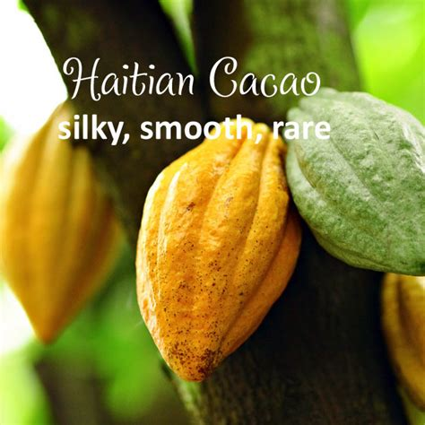Buy online Haitian Cacao (raw beans) Certified organic