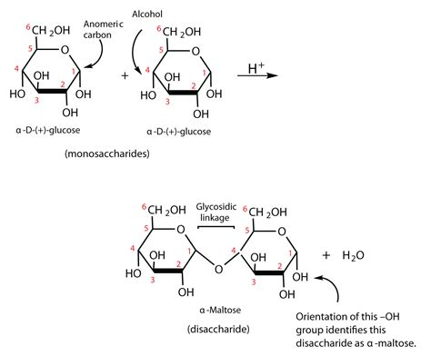 carbohydrates undergo oxidation carbohydrates