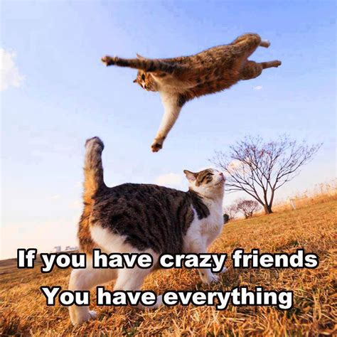 funny cats crazy friends