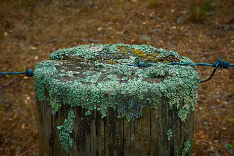 wallpaper  tree stump grass photography wood