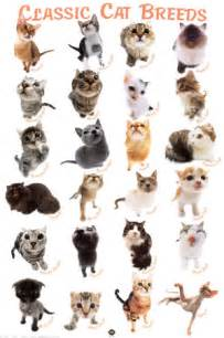 types of cats my top collection cat breeds and pictures