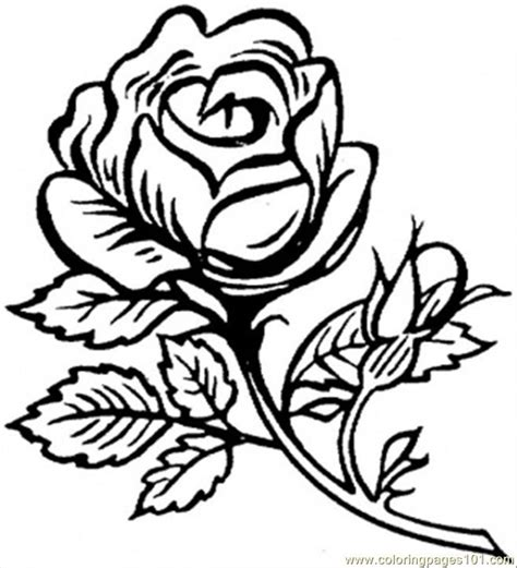 coloring pages beautiful big rose natural world gt flowers