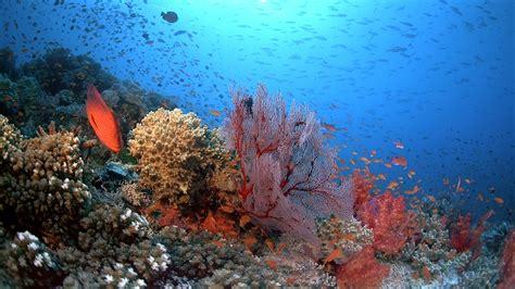 coral reef adventure blu ray disc title details 014381488159 blu raystats com imax coral reef adventure blu ray review doblu com
