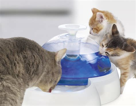 heat l for cats catit fresh clean water review how well does