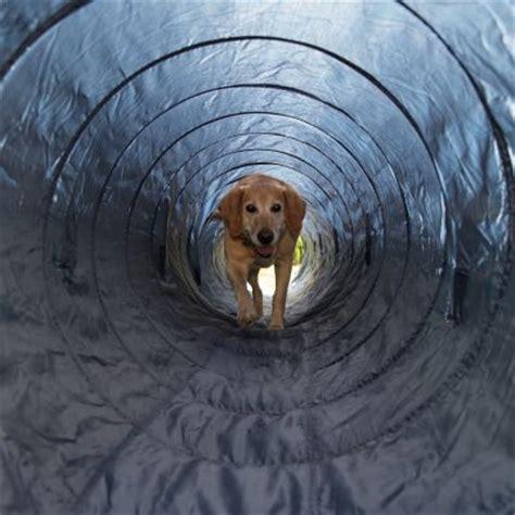 agility tunnel trixie agility tunnel g 252 nstig bei zooplus