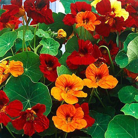 Bukan Sembarang Bunga bukan hanya indah bunga ini bisa dimakan alibi id