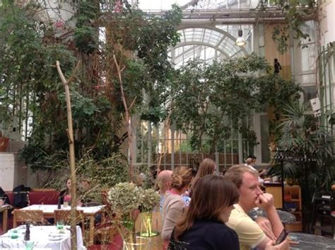 piante interne piante interne bild palmenhaus wien tripadvisor