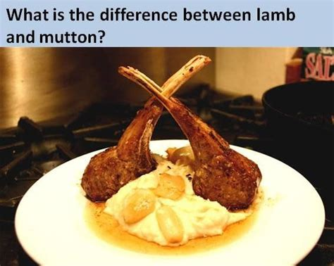 Difference Between Rack Of And Chops what s the difference between and mutton why isn t