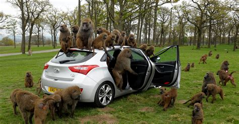 best safari park monkeying around our favourite safari park worst