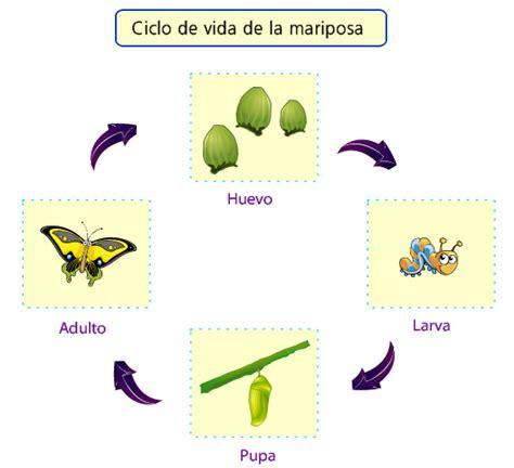 imagenes ciclo de vida de una persona para imprimir ciclo de vida mariposa y rana