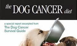 cancer diet for dogs cancer library cancer