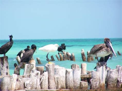 greater than a tourist isla holbox quintana roo mexico 50 travel tips from a local books holbox island pictures traveler photos of holbox island
