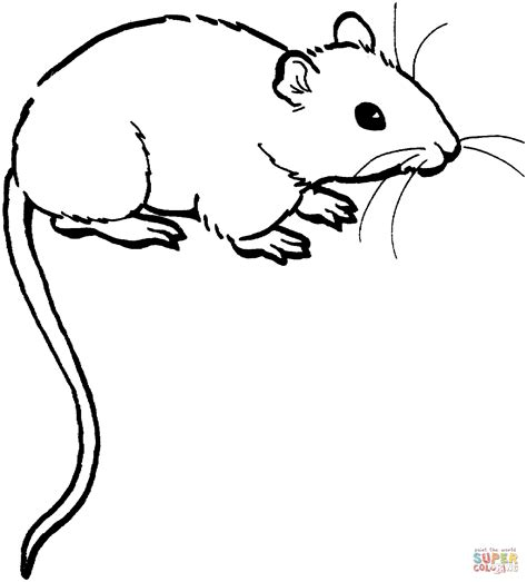Mouse Coloring Pages Printable Mouse 1 Coloring Page Free Printable Coloring Pages by Mouse Coloring Pages Printable