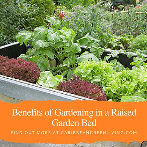 benefits of raised garden beds benefits of gardening in a raised garden bed caribbean