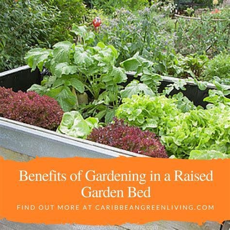 benefits of raised garden beds benefits of gardening in a raised garden bed caribbean green living