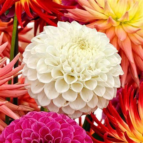 Bulk Flowers by Wholesale Flowers Bulk Wedding Flowers
