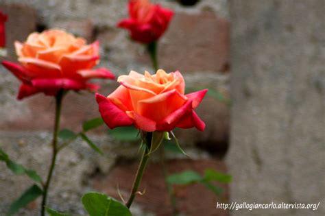 fiori fotografie fiori e piante in piemonte fotografie