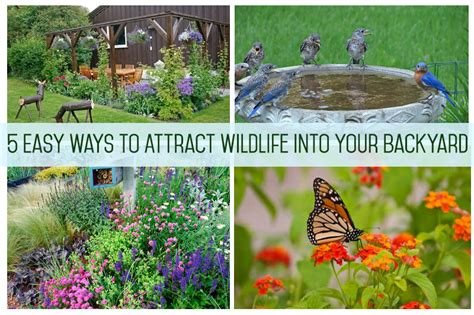how to attract wildlife to your backyard 5 easy ways to attract wildlife into your backyard