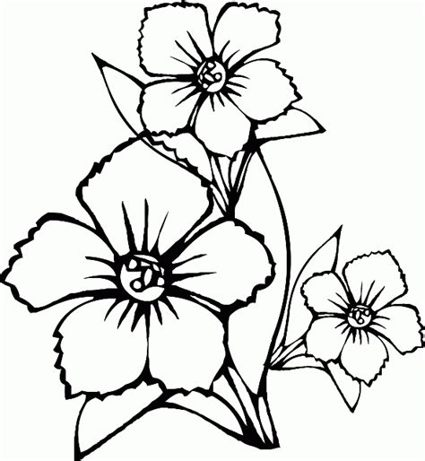 disegni semplici di fiori sta e colora tre semplici fiori disegni da colorare e