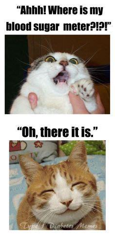 Diabetes Cat Meme - type 1 diabetes on pinterest type 1 diabetes diabetes