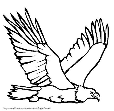 aneka gambar mewarnai gambar mewarnai burung elang