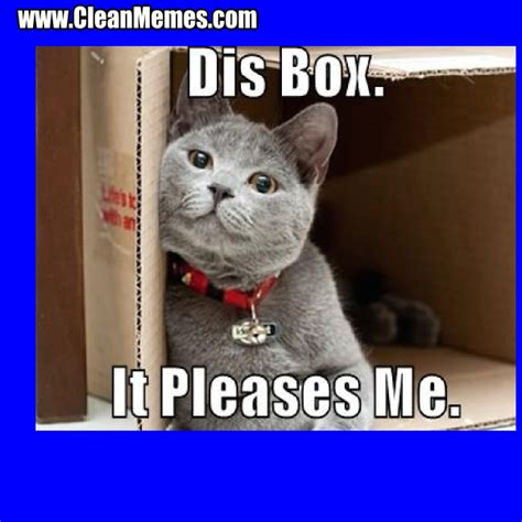 Clean Cat Memes - clean cat memes www imgkid com the image kid has it