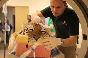Vets In Veterinarians Come To The Aid Of Big Animals Mnn