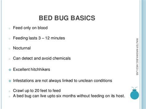 how long do bed bugs live without blood bed bugs mnace