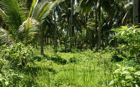 wallpaper tropical green tropical islands wallpaper 660360