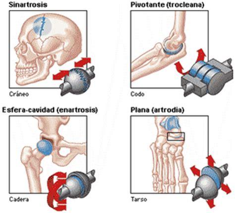 imagenes fijas html fisioterapia las articulaciones generalidades