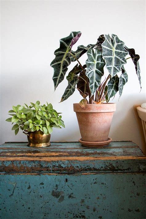 29 most beautiful houseplants you never knew about 808 besten fleurs et verdure bilder auf pinterest