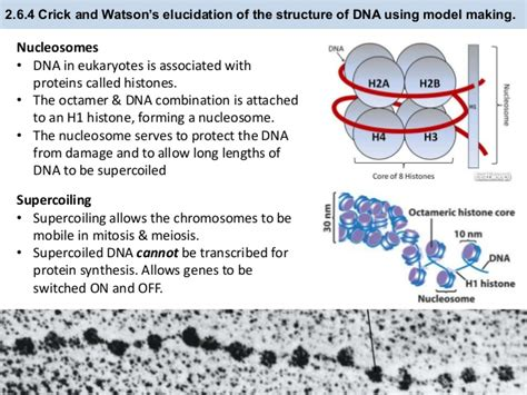 12 2 the structure of dna answers 100 12 2 the structure of dna worksheet answers