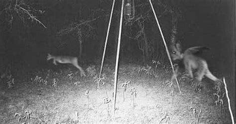 Vivo Vibe Bunny 1 Pcs se resuelve misterio chupa cabras la ventana mundial