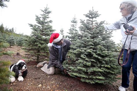 keep it real christmas tree farms appeal to tradition