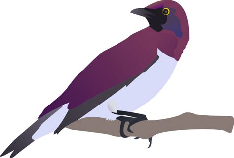 birds clipart exotical bird clip at clker vector clip