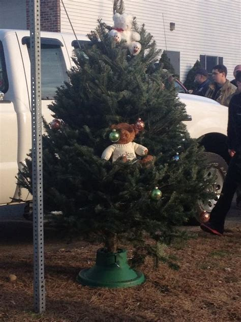 pics nc woman donates 26 christmas trees to newtown for