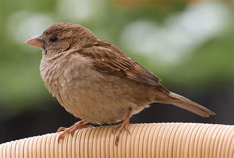 dzioby ptak 243 w