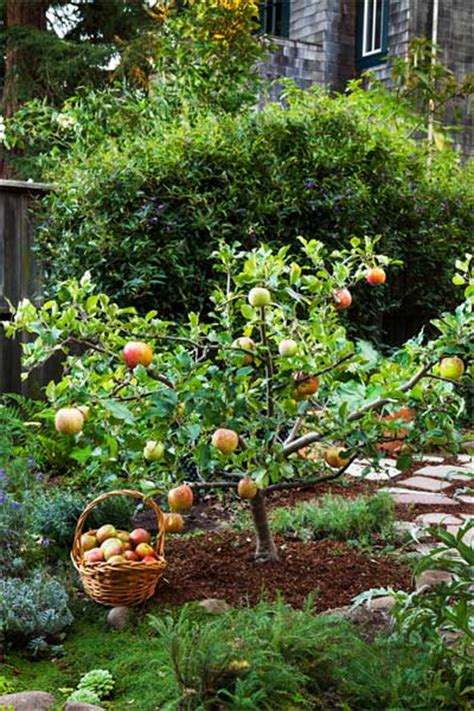 grow fruit trees for big rewards apple tree