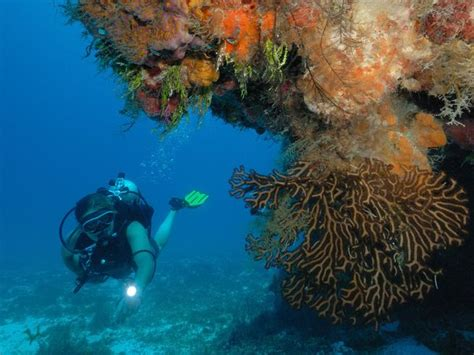 diving hairstyles experience scuba diving in cozumel the diving capital of