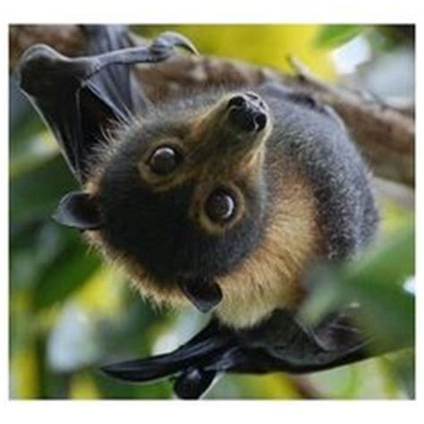 backyard flying fox my backyard zoo on pinterest 99 pins