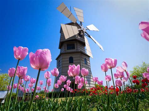 imagenes tulipanes naturales la huella de mi sendero tulipanes