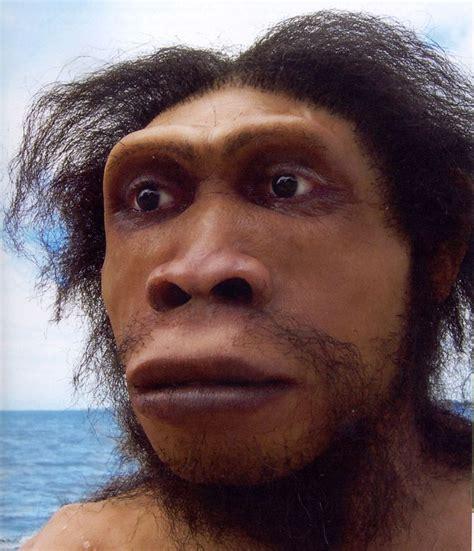 homo erectus homo ergaster la talla y proporci 243 n del cuerpo es similar a la nuestra el cerebro sufre un