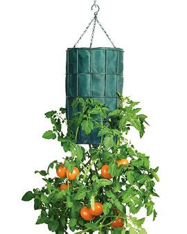 hanging tomato planters tomato planters success kit for tomatoes