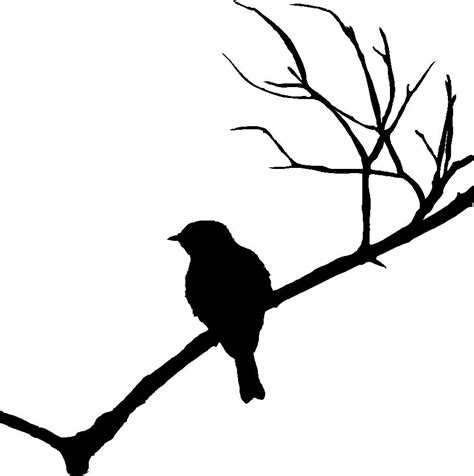 Tree Branch Home Decor by Vinyl Wall Art Wall Decals Bird On Branch Silhouette