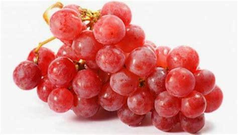 Anggur Pacitan Gambar 3 Jamur 14 manfaat anggur merah untuk kesehatan daunbuah